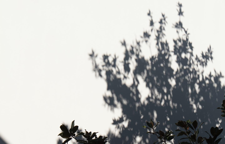 Golden Hour Shadow Header Winter Wellness Tips